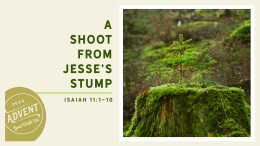 A Shoot From Jesse's Stump